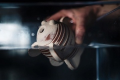 Ceramic bubble fish by ceramic artist jon williams being submerged into a tank of water