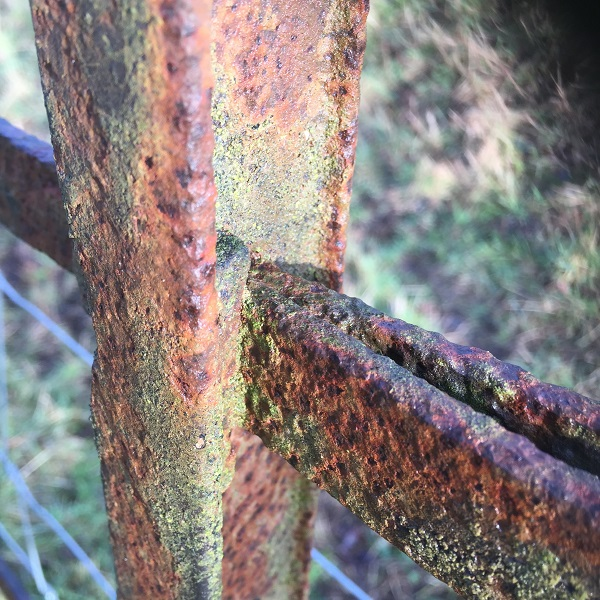 beautiful rusty deer fencing in eastnor